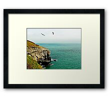 Sea birds soaring high. Framed Print