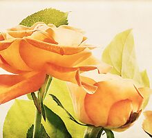 Orange Roses by Natalie Kinnear