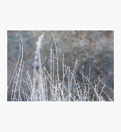 Winter Grass Snow Scene Photographic Print