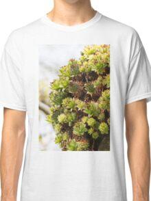 succulent plant Classic T-Shirt