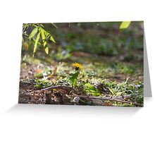 meadow at sunset Greeting Card