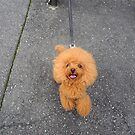 Tokyo poodle by Sue Ballyn