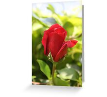 Beautiful Red Rose Bud Greeting Card