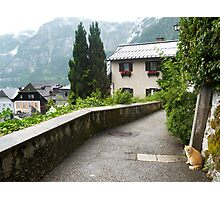 Cats of Hallstatt Photographic Print
