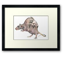 lab rat Framed Print