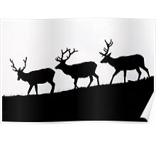 Elk Silhouettes Poster