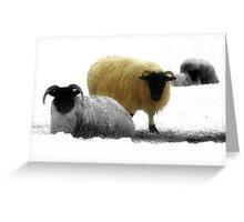 Sheep on Exmoor Greeting Card