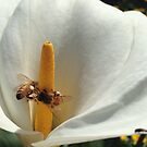 Bees in the Lillies by Cassie Robinson