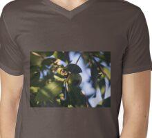 Rose Apple Fruit Amidst the Leaf Foliage  Mens V-Neck T-Shirt