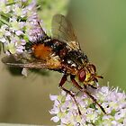 The Fly by dilouise