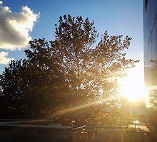 nice sunshine by 黃 黃