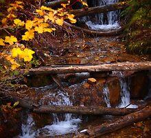 Fall flowing by Cjherre