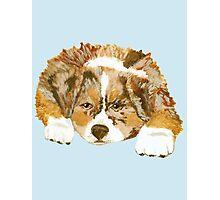Red Merle Australian Shepherd Puppy Photographic Print