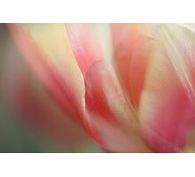 Reaching for Spring  - JUSTART © Photographic Print