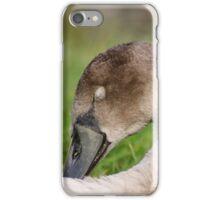 Sleeping cygnet iPhone Case/Skin