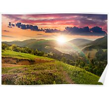 flowers on hillside meadow with forest at  sunset Poster