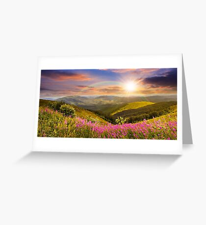 wild flowers on the mountain top at sunset Greeting Card