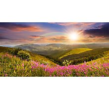 wild flowers on the mountain top at sunset Photographic Print