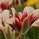 Mountain Flower - JUSTART © by JUSTART