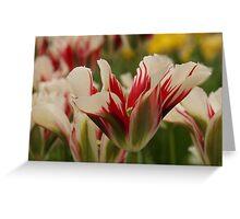 Mountain Flower - JUSTART © Greeting Card