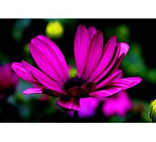 Purple Flowery Thingy Photographic Print