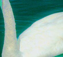 Swan on an aqua lake Sticker