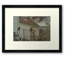 Stubborn Sparrows Framed Print