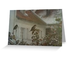 Stubborn Sparrows Greeting Card