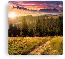 coniferous forest on a  mountain top at sunset Canvas Print