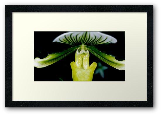 Dream a Little Dream - Orchid Alien Discovery by ©Ashley Edmonds Cooke