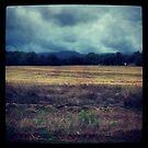 Stormy Skies Ahead by Stephanie Bynum