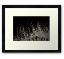 Raindrops on the Edge of a Dandelion Framed Print