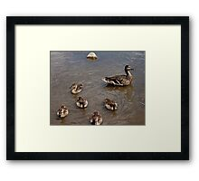 Adventures with Mama Framed Print