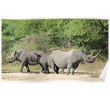 Black Rhino - Family of Horns Poster