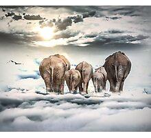 Elephants and Babys Photographic Print