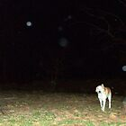 Caleb and the Orbs by PaulCoover