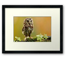Cute Owl Framed Print