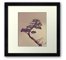 The Bonsai Framed Print