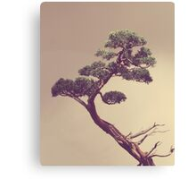 The Bonsai Canvas Print