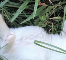 Boo the Deaf Kitty in the Grass Sticker