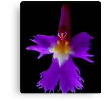 The Wizard - Orchid Alien Discovery Canvas Print