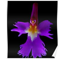 The Wizard - Orchid Alien Discovery Poster