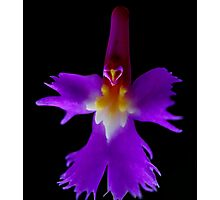 The Wizard - Orchid Alien Discovery Photographic Print