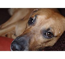 Bored Pooch Photographic Print