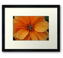 Nectar Points Available Here Framed Print