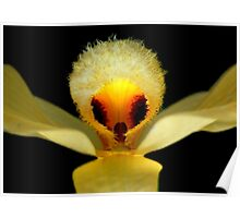 Peek-A-Boo - Orchid Alien Discovery Poster