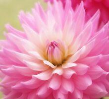 Soft Pink Dahlia by Ra12