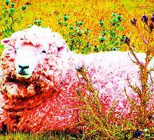 Flossy the sheep by Nicola Morse
