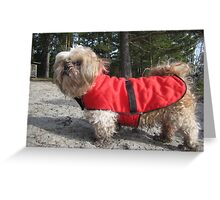 shih tzu happy Greeting Card