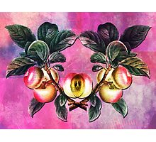 APPLE TIME AGAIN Photographic Print
